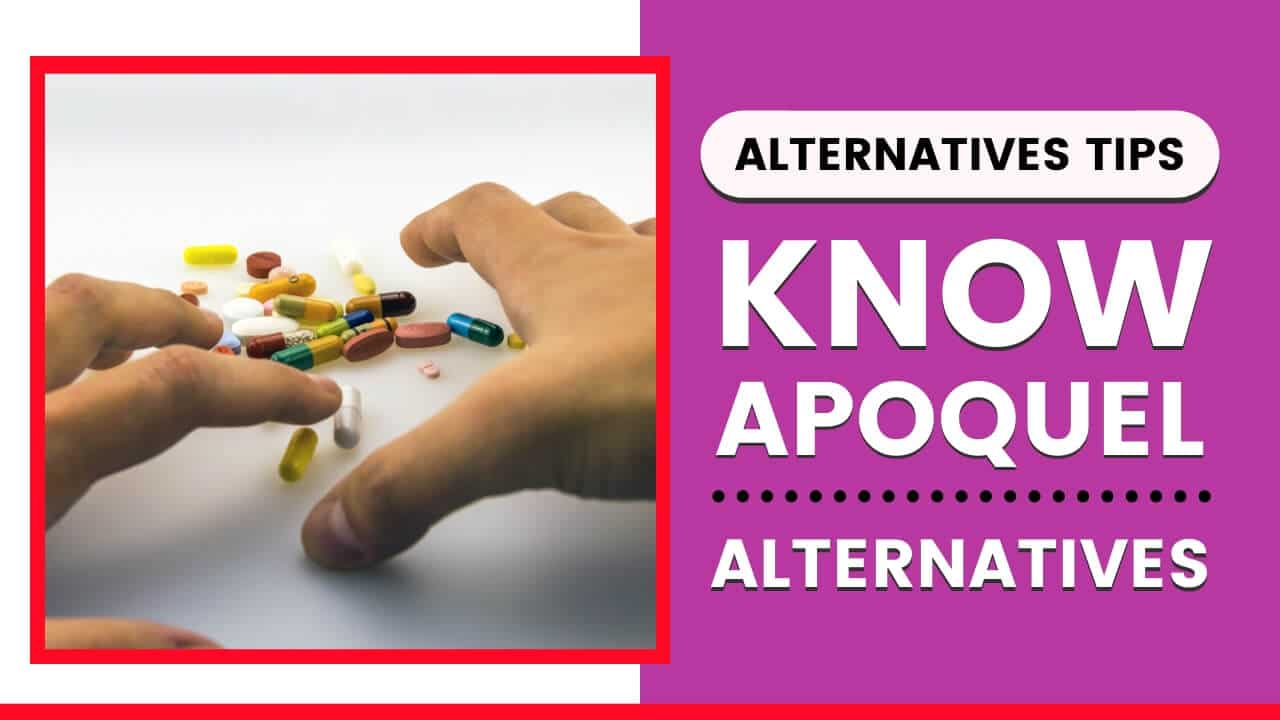 List of 5 Apoquel Alternatives